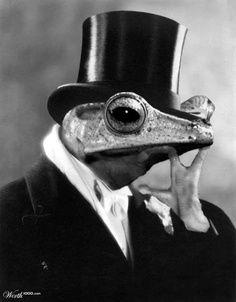 monsieur le toad