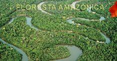 Biodiversidade amazônica, amazônia abriga orquídeas, orquídeas da Amazônia, Orquídea florescendo em garrafa, belas orquídeas da Amazônia.