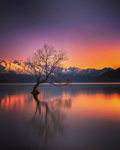 """This tree is called the """"lone tree of Wanaka"""" and is considered the most photographed tree in New Zealand. Wanaka New Zealand. Cool Landscapes, Beautiful Landscapes, Moon Photography, Travel Photography, Monuments, Wanaka New Zealand, Forest Sunset, Lake Wanaka, Landscape Photographers"""