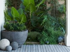 40 Small Courtyard Design with Some House Plants - Small courtyard gardens - Diy Garden, Garden Cottage, Wooden Garden, Garden Care, Garden Pots, Spring Garden, Garden Projects, Lush Garden, Tropical Backyard