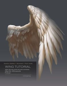 Drawing People For people who may interested how to draw and paint bird wings , if you are interested please check the link below, Wing Tutorial This package includes: videos format) ( 4 mins) . Wing Anatomy, Feather Anatomy, Wie Zeichnet Man Manga, Art Tutorials, Drawing Tutorials, Bird Wings, Photoshop, Angel Art, Angel Wings Art