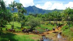 Private Ranch Estates on Kauai - Hawaii Real Estate Market & Trends | Hawaii Life