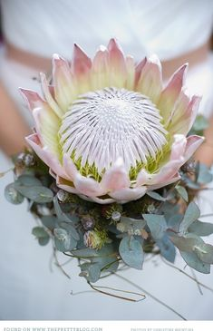 King protea and eucalyptus for a bouquet that will definitely leave an impression. Flor Protea, Protea Bouquet, Protea Flower, Protea Wedding, Wedding Bouquets, Wedding Flower Arrangements, Floral Arrangements, Wedding Advice, Nature