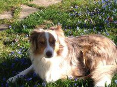 Springtime Dog