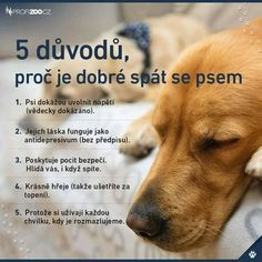 Pre toto sa to oplatí. Fun Facts About Animals, Animal Facts, Story Quotes, Dog Quotes, Dog Body Language, Dog Best Friend, English Words, True Friends, Cute Animals