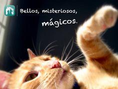Gatos en adopción, adoptar mascotas, cats, kitties, cat of the day, instagatos,cats lover, adopción cachorros, sweet kitty, http://whapets.com/