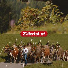 Wenn sich die Kühe wieder zurück ins Tal begeben, startet die bunteste Saison im Zillertal - der Zillertaler Bergherbst! Adults Only, Activities, Adventure, Landscape, Nature, Movie Posters, Nice Asses, Scenery, Naturaleza
