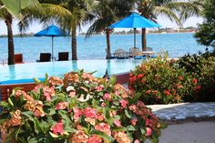 Lush tropical gardens nestle one of two beachside infinity swimming pools at Chabil Mar Resort in Placencia, Belize. #Belize resorts #Central America Resorts