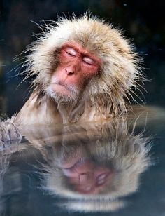 Macaque Relaxing In Hot Spring by aeschylus18917, via Flickr #japan #nagano