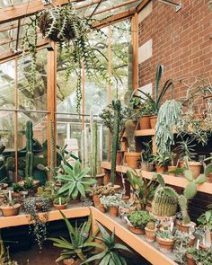 How to make the small greenhouse? There are some tempting seven basic steps to make the small greenhouse to beautify your garden. Large Greenhouse, Greenhouse Growing, Greenhouse Wedding, Greenhouse Plans, Backyard Greenhouse, Cactus, Indoor Garden, Indoor Plants, Plant Watering System