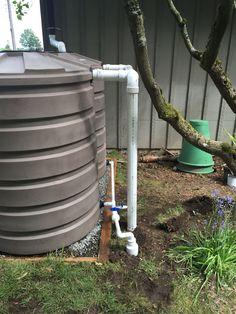 3 X 420 gallon tanks in West Seattle. Overflow to sidewalk. #rainwaterharvesting