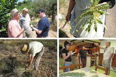 Etnobotanica, una giornata di formazione all'Università di Milano