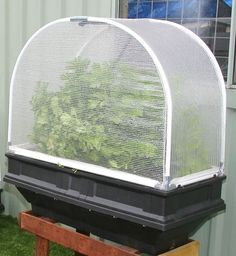 Now you can easily grow vegies on your balcony patio verandah or courtyard with this small container Garden with Vegecover It provides protection from wind and pesky wildlife Assembles in about 20 minutes Self-watering and easily raised SIZE x DEPTH