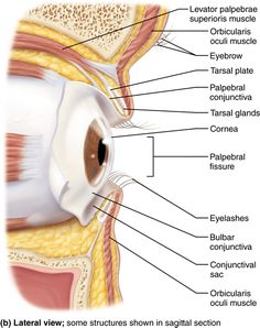 Which Of The Following Is An Accessory Organ Of Digestion The Anatomy Of Words  Through The Eye Of A Lens  Pinterest