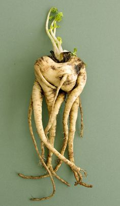 67 best Ugly is the new beautiful! images on Pinterest | Fruits and Planters Veggie Box Restaurant Story on veggie pringles, veggie trees, veggie baskets, veggie animals, veggie plants, veggie garden,