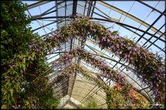 Longwood Gardens Orchid Festival Photographs