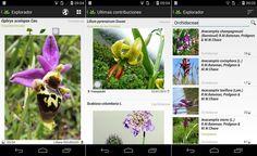 PlantNet es una nueva app móvil, para Android e iOS, capaz de reconocer una gran variedad de plantas a partir de sus fotografías.