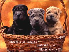 There is not much that is cuter than Shar-Pei puppies! Get a Sharpei puppy Shar Pei Puppies, Cute Puppies, Cute Dogs, Dogs And Puppies, Cachorros Shar Pei, Animals And Pets, Baby Animals, Cute Animals, Animal Babies