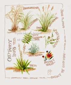 South Carolina LowCountry Nature Journaling and Art: Botany by Golf Cart