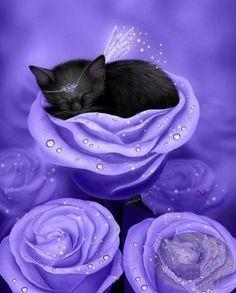 Lilac Daydreams Fairy Cat by © Melissa Dawn, via melissadawnart.com