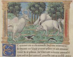 Marco Polo. Auteur du texte Url of the page : http://gallica.bnf.fr/ark:/12148/btv1b55005891m/f61.item