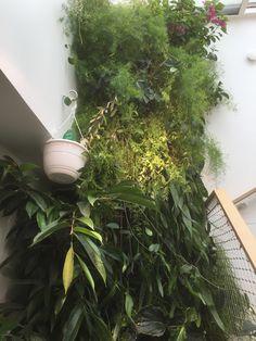 greenwall, vert, plante, design, naturel, moderne, bien-être, vie, mur végétal, vertical, maison, détente, mur végétal, intérieur, escaliers, famille Market One, Travel Logo, Jolie Photo, Plantation, Beautiful, Nice, Pretty, Design, Stairs