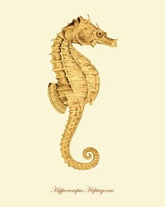 Seahorse Vintage prints old prints home decor wall art Ocean Decor Natural History sea life art antique prints nature print 8x10 art print