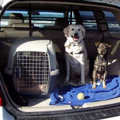 What's the best way to move my pets cross-country? | MNN - Mother Nature Network