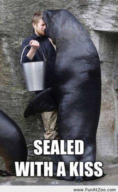 Delfiini kouluttaja dating