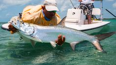 Salt water fly fishing | Cuba | Tarpon