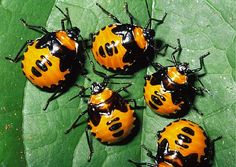 Top 12 beneficial insects for garden-How they help plants to grow ...