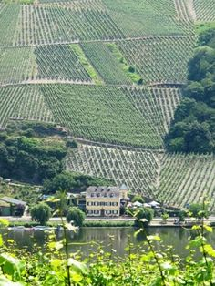 "Vineyards // Wine-tasting is a popular activity here. Sample local white wines or Roter-Weinbergs-Pfirsich Likör — a cordial made from the small, tart ""red peaches"" unique to the Mosel Valley. Throughout the region on summer weekends & during the fall harvest, towns host wine festivals with oompah bands, colorful costumes, & dancing, powered by the good food & wine. (Mosel River, Germany)"