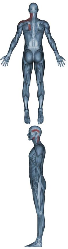 42 best Health - Structural images on Pinterest   Anatomy, Anatomy ...