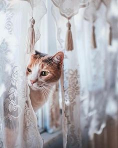 crescentmoon animalia Pretty Cats, Beautiful Cats, Cute Cats, Funny Cats, Beautiful Horses, Beautiful Pictures, Crazy Cat Lady, Crazy Cats, Animals And Pets