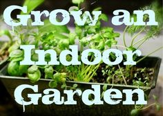 Things to do with kids: My Apartment Garden: How to Grow an Indoor Herb or Vegetable Garden