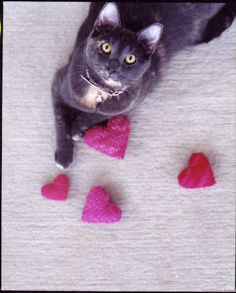 catnip hearts - also this cat looks just like my Mrs. Parilla McGilvery.