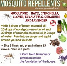 Pest Control Recipes | The WHOot