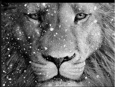 King Leo!!!!