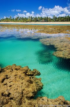 Crystalline and calm warm water of the natural swimming pools of Taipu de Fora reefs on a clear day of summer, Marau Peninsula, Marau Municipality, State of Bahia, Northeast of Brazil - Piscinas naturais da Praia de Taipu de Fora, Península de Maraú, Bahia, Brasil