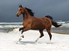 A beautiful picture of #Stunning #Horse And The #Sea Wallpaper downloaded from http://alliswall.com