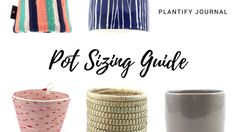 Pot Sizing Guide: Matching Indoor Plants with Pots Plant Decor, Indoor Plants, House Plants, Pots, Planters, Create, Simple, Inside Plants, Indoor House Plants