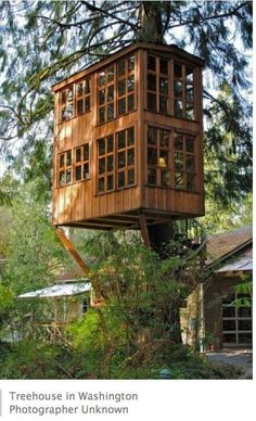 TreeHouse In Washington