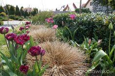 Znalezione obrazy dla zapytania tulipany lindsay80