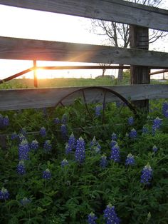 Spring was my favorite time of the year when I lived in Austin; mostly because of the Bluebonnets:)