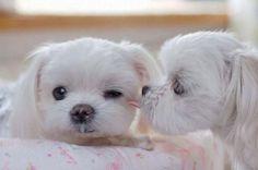Very cute puppies - SunnyLOL