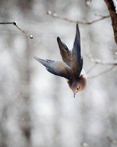 Vogel-Fotografie: Die Kunst der Aufenthalt Aloft Nr. 3 Trauer Taube (Zenaida Macroura)