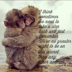 We have no more right than any other animal.