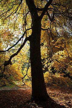 Autumn Silhouette by Antony Scott on 500px