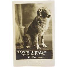 WW1 Dog Mascot Postcard - Co. H 10th Ohio Infantry