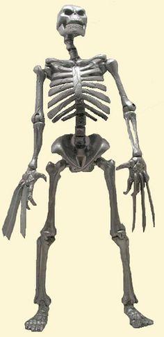 wolverine's skeleton | Wolverine skeleton | Flickr - Photo Sharing!